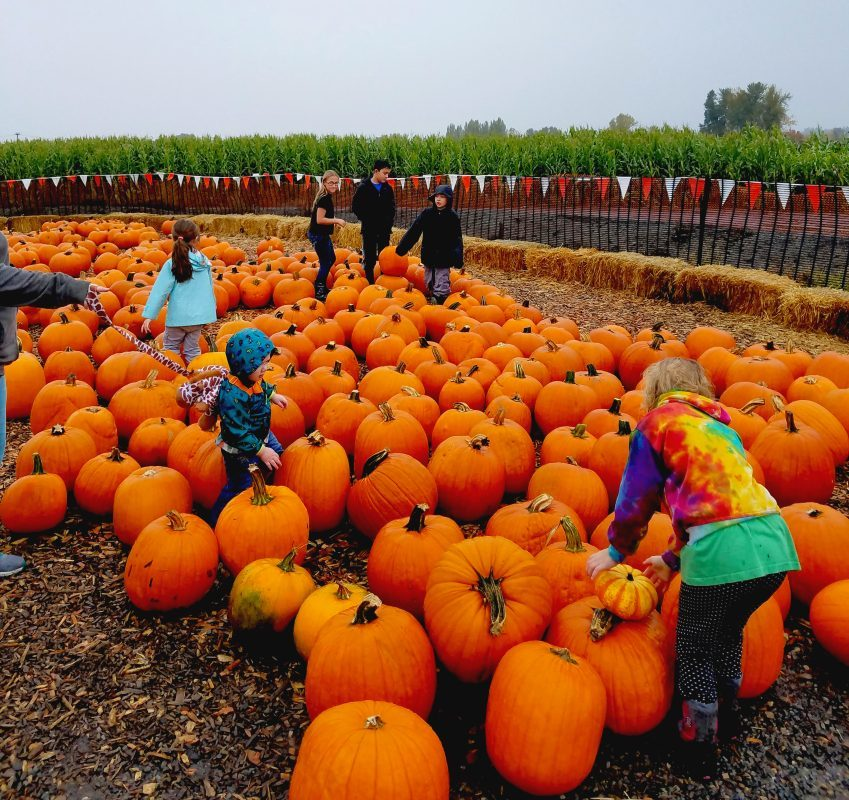 Families With Young Children Pumpkin Patch 2017