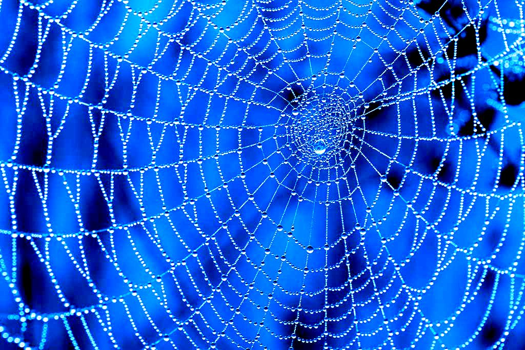 Large Spider Web